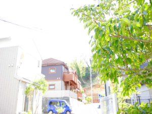 LUSHLY GREEN TOWN GUMYOUJI
